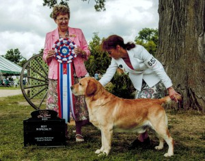 Grand Champion Golden Lab Dany