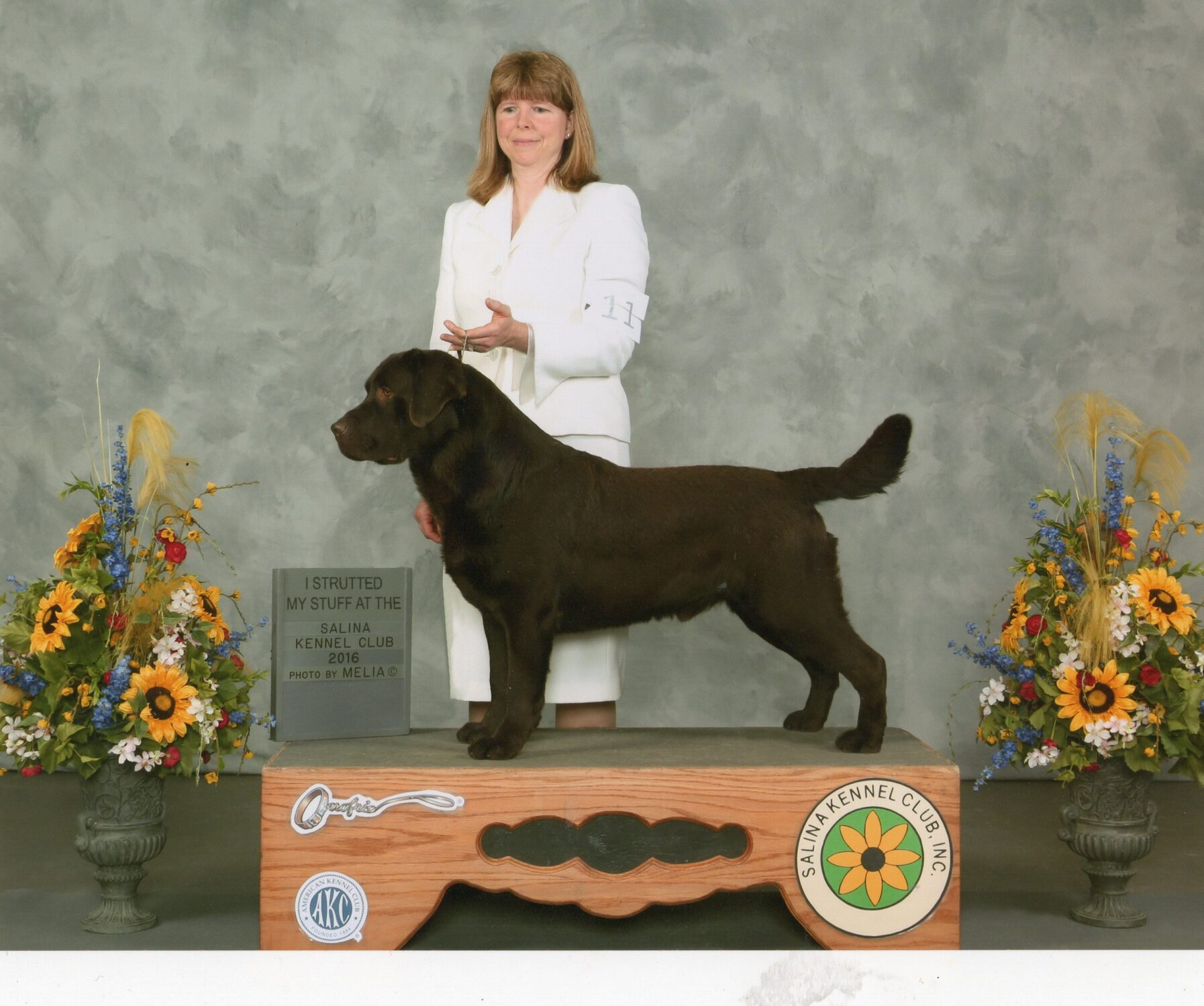 Grand Champion AKC Labrador Retriever