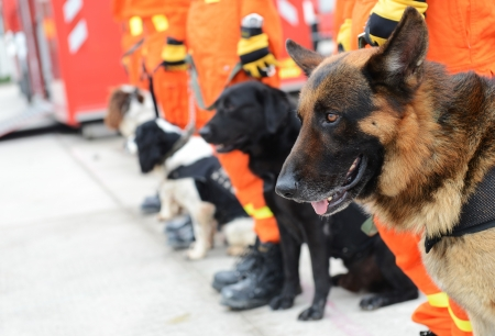 Search and rescue dogs in training