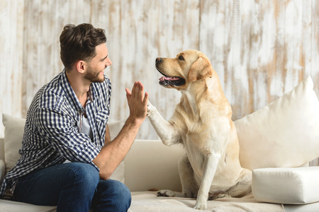 Why Labrador Retrievers are Good Family Dogs