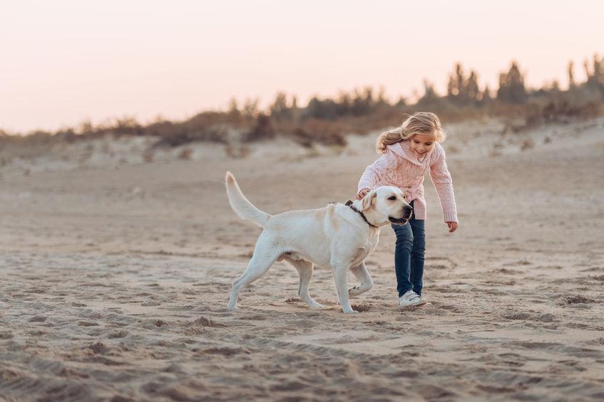 How to Get Your Labrador Retriever Off the Leash