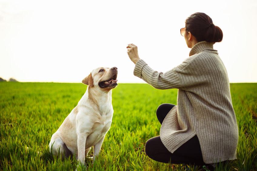 Fun Dog Toys for Your Labrador