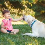 Labrador retriever with child