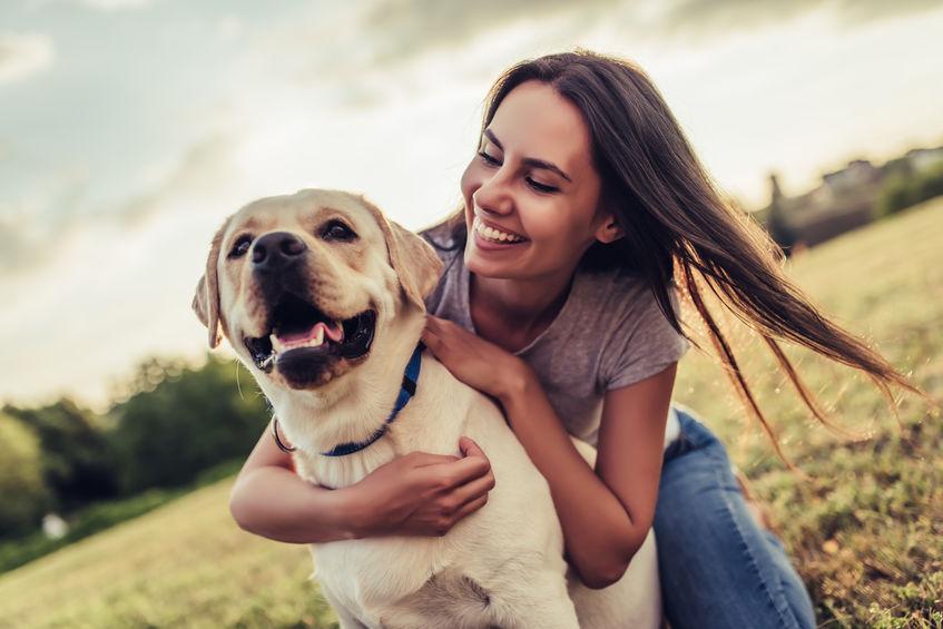 Labrador Retriever service dog