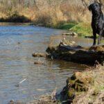 Summer activities with labrador retriever